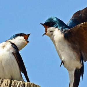 Birds_square