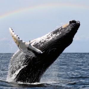humpback_artikel