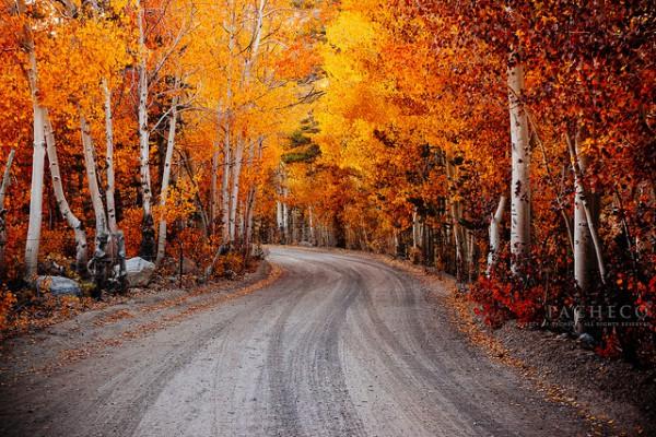 Eine Straße durch einen Herbstwald.