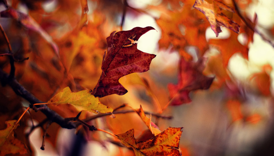Herbstliebe Kleinerdrei